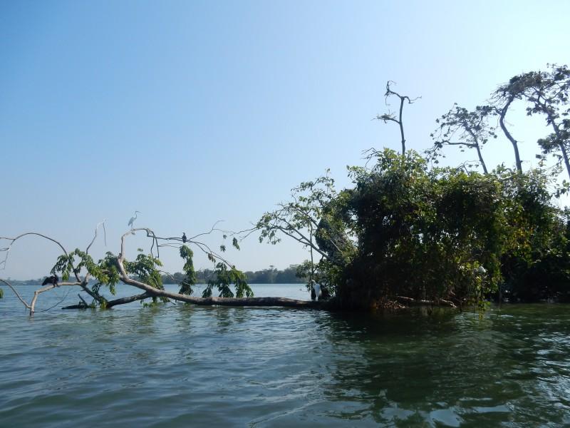 vogels op rivier Rio dulce