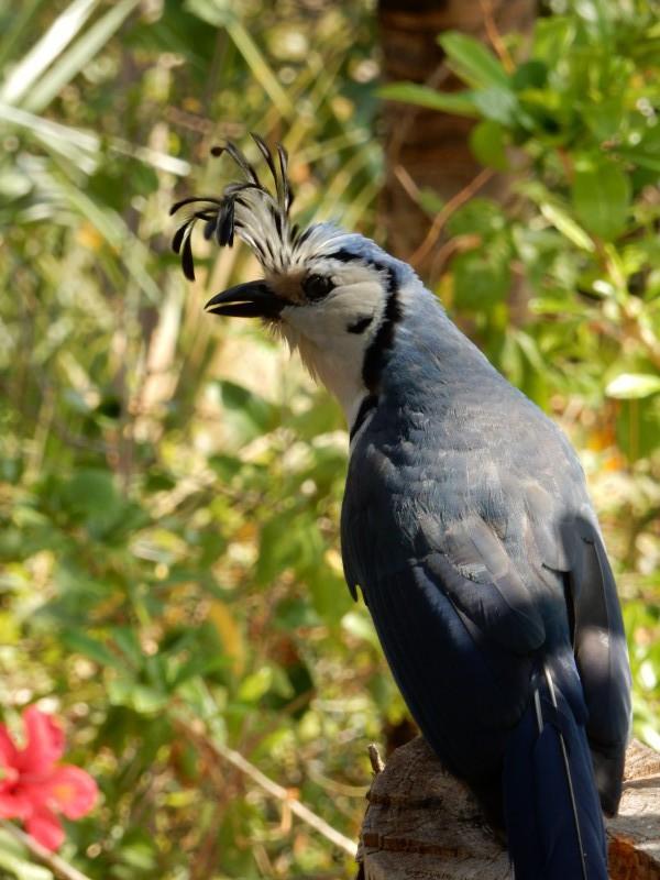 Vogel isla ometepe