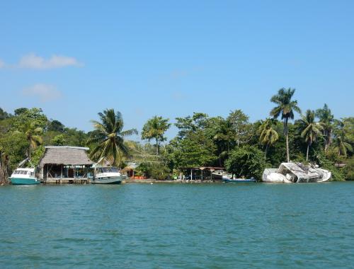 Mangrove Rio dulce guatemala