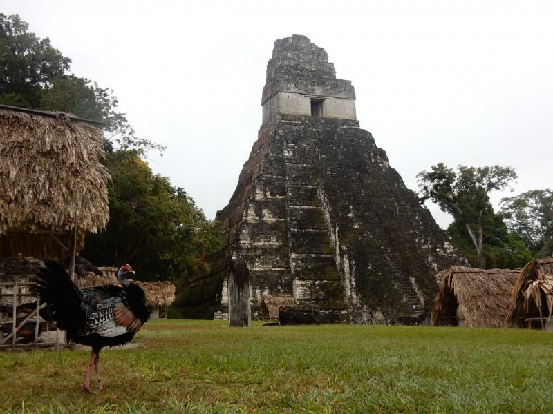 Maya ruines