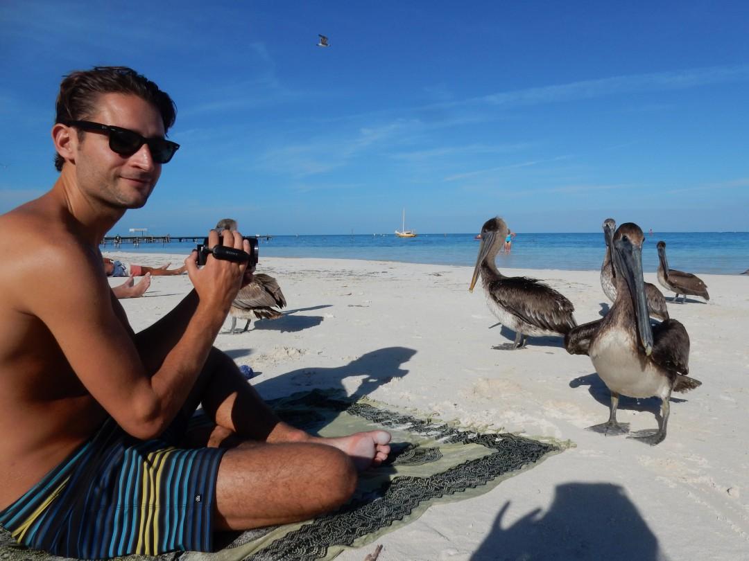 Pelikanen op Caye Caulker Belize